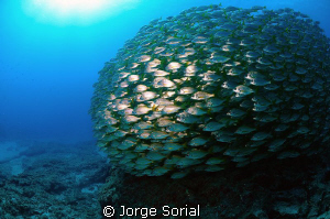 Underwater ball? by Jorge Sorial 